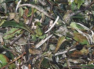 Pai Mu Tan weisser Tee aus Fuding, Provinz Fujian, China - Super-Closeup