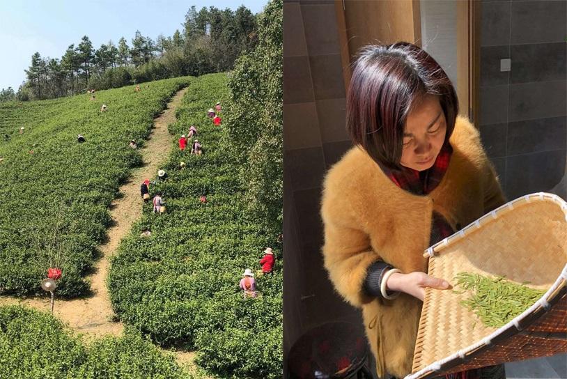 Long Jing Grüner Tee - Frühlingspflückung in Hangzhou