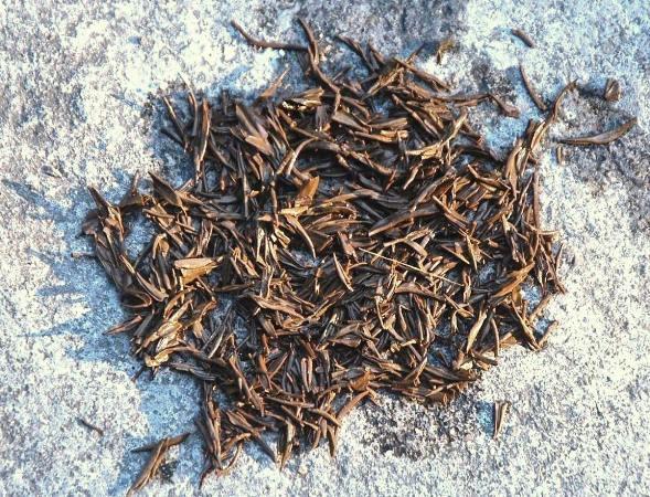 Lapsang Qingming Jin Jun Mei Golden Eyebrows Schwarzer Tee, nasse Teeblätter nach dem Aufguss