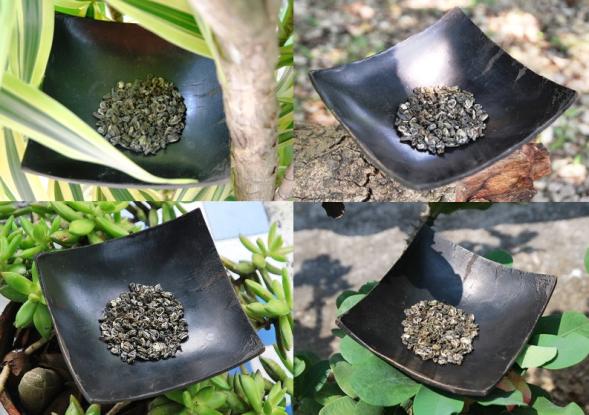 Gerollte Blätter von Artisan High Mountain Bi Luo Chun Grüner Tee
