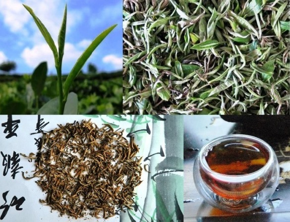 "Fengqing Black Tea from Yunnan, China (""Dianhong Cha"")"