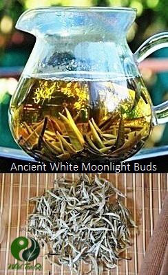 Weißer Tee aus den Frühlingsknospen alter Teebäume in Yunnan