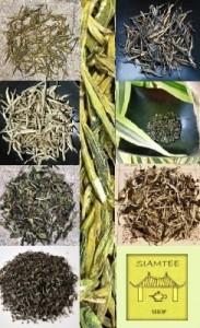 Biodiversi-TEA