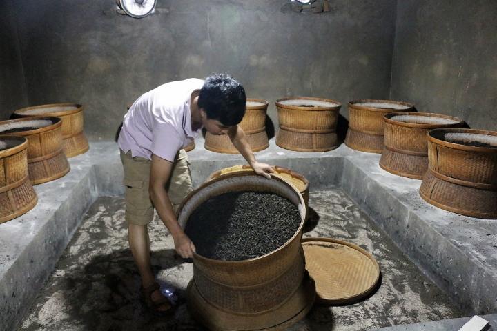 Rösten von Wuyi Rock Oolong Tee über Holzkohlefeuer