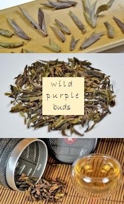 Wild Purple Buds Sheng Pu Erh Tee
