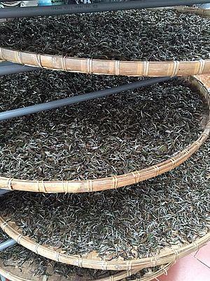 Schritt 1: Teeblätter für Pai Hao Tra Schwarzer Tee welken in der Teefabrik