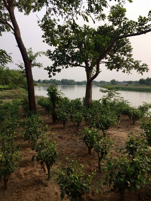 Doke Teegarten, Bihar, Indien: Biodiversität und organischer Anbau