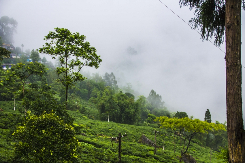 Goomtee Teegarten, Darjeeling, Indien