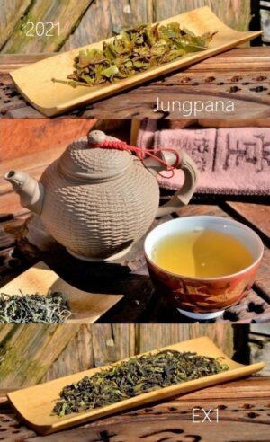 Jungpana First Flush 2021 Spring Delight EX1 - Erste Frühlingspflückung 2021 des Jungpana-Teegarten in Darjeeling
