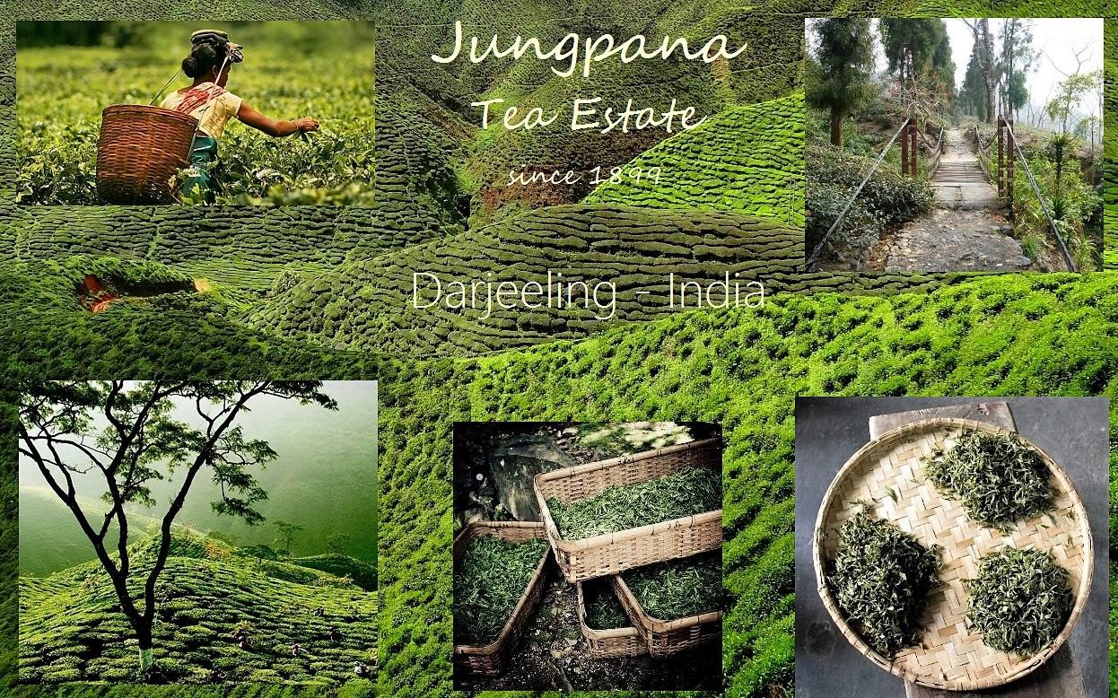 Jungpana Teegarten, Darjeeling, Indien