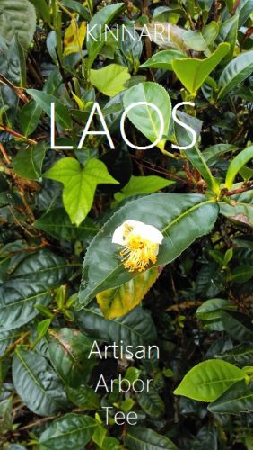 Artisan Arbor Tees von Kinnari, Laos