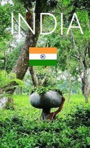 Tee aus Indien Kategoriebild