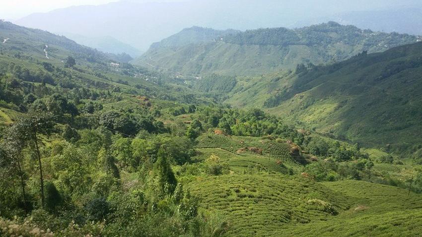 Margaret's Hope Teegarten, nördliches Kurseong Valley, Darjeeling, Indien