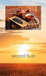 Second Flushes - Tees aus Darjeelings Sommerpflückung