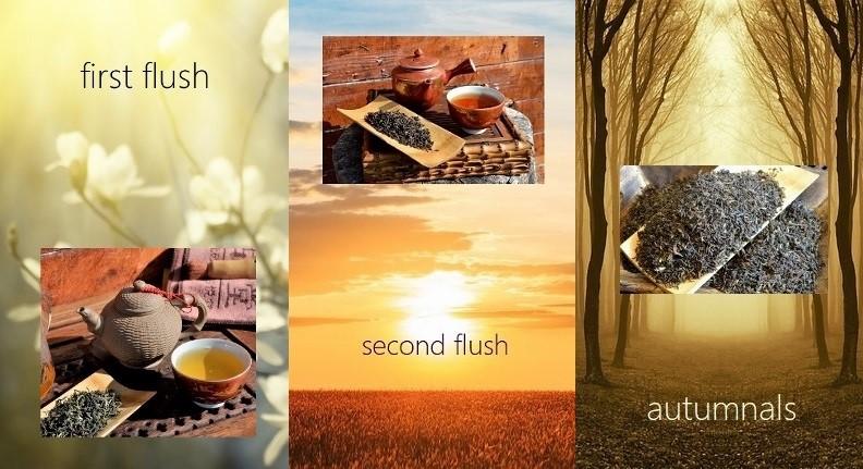 Three Seasons Collage - first flush, second flush, autumnal
