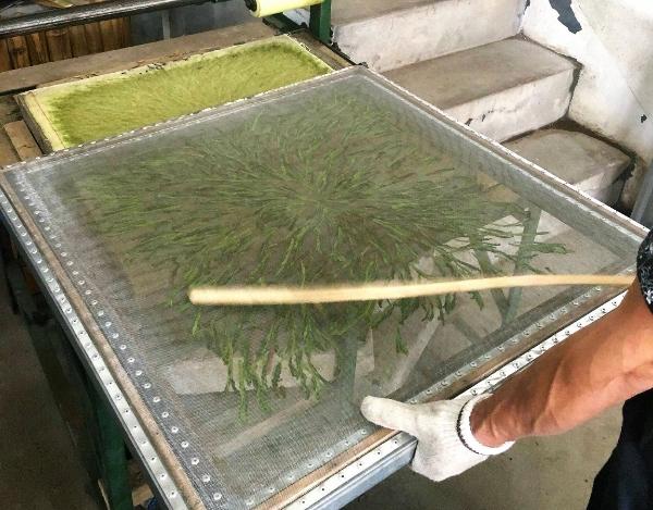 Taiping Houkui Grüner Tee - Pressen der Teebläter zwischen 2 Sieben nach dem Rollen