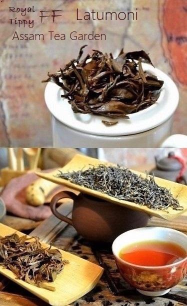 Latumoni Royal Tippy Black Assam First Flush Schwarzer Tee aus der Frühlingspflückung des Latumoni-Teegartens in Assam