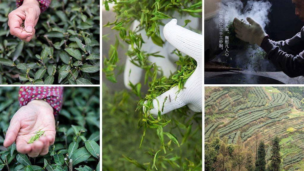 Mengding Ganlu Grüner Tee - Pflückung und Verarbeitung