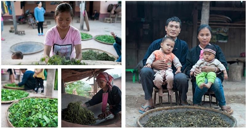 """Teeverarbeitung - """"Kill Green"""" : Stoppen enzymatischer Oxidationsprozesse durch Rösten der Teeblätter in der Wok-Pfanne"""