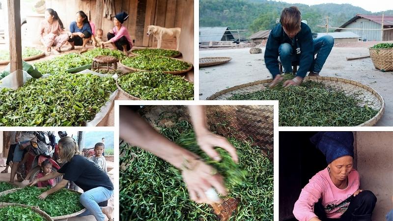 Welken der Teeblätter - Collage