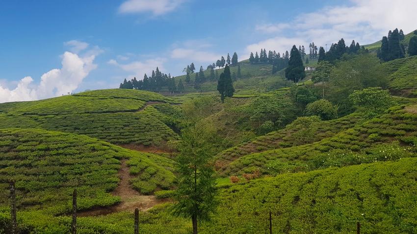 Nepal Teegarten