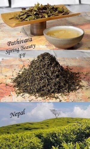 Pathivara Spring Beauty First Flush 2021 - Frühlingspflückung des naturnahen Teegartens auf 2000 Metern Höhe in Nepal