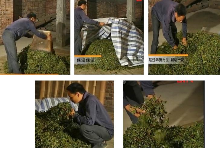 Wet-Piling / Wo-Dui / Feuchtes Aufschichten bei der Verarbeitung von dunklem Tee